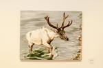 Christa Grogan, Caribou in Water, Acrylic on Canvas
